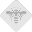 pests-bees